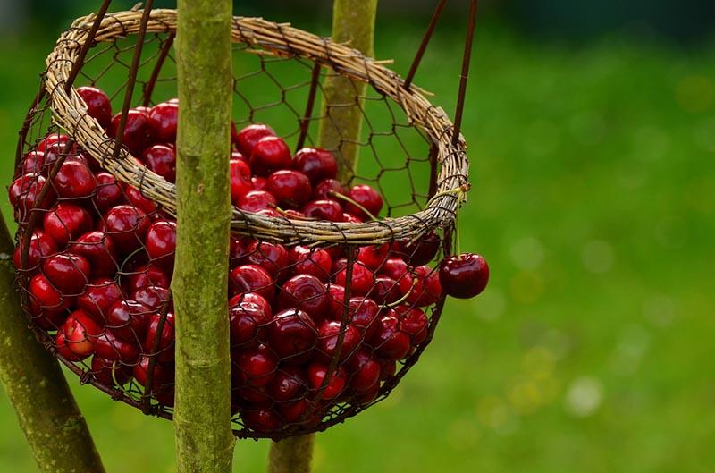 Frutas de temporada primavera - cerezas